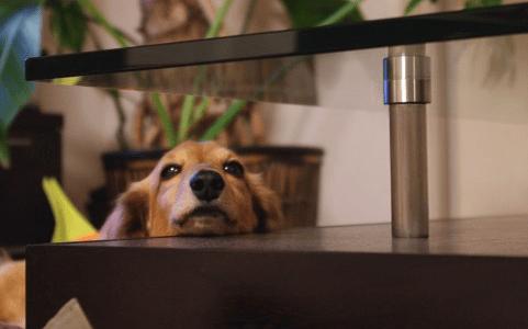 子犬のケア