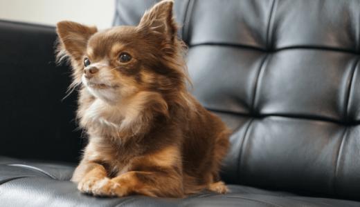 子犬と掃除