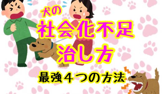 犬の社会化不足の治し方!【要注意】最強4つの方法