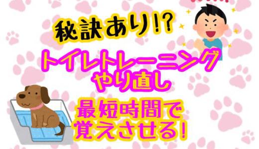犬のトイレトレーニングがやり直し!?理由は?最短でやり直す秘訣!